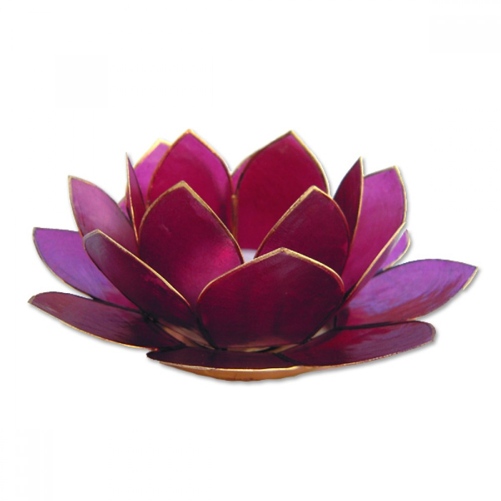 Lotusstage - Fuchsia