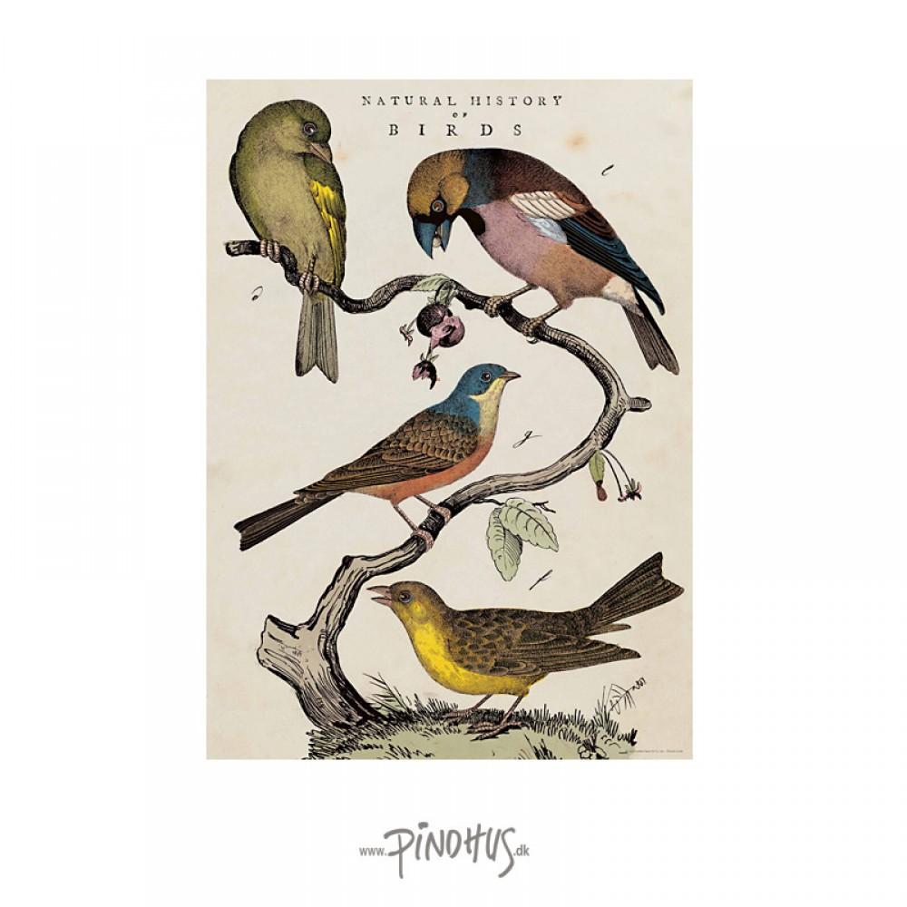 Plakat Birds 50x70cm-30
