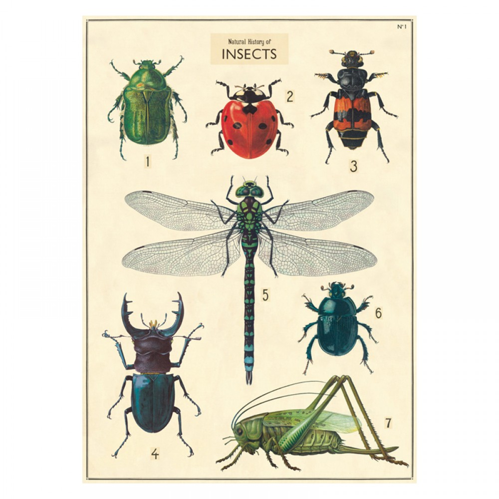 Plakat History insects close up-30