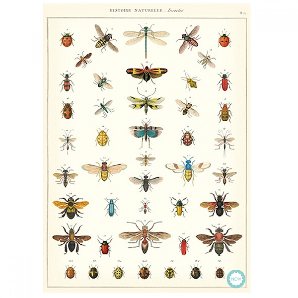 Plakat History insects-30