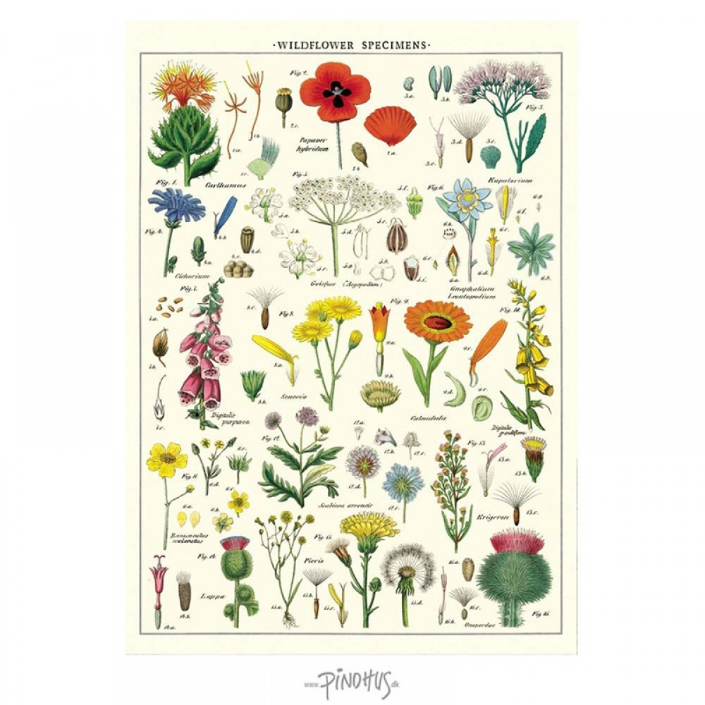 Plakat Wild Flower 50x70cm-32