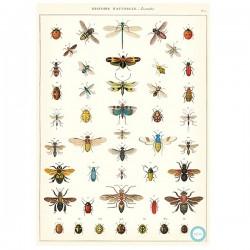 PlakatHistoryinsects-20