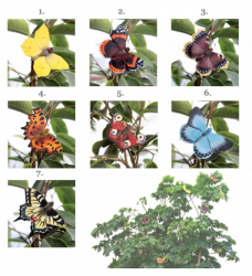 DecoButterfly m/magnet-20