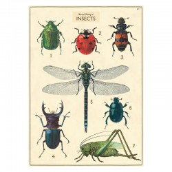 Plakat History insects close up-20