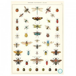 Plakat History insects-20