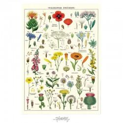 Plakat Wild Flower 50x70cm-20
