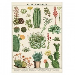 Plakat Kaktus/sukkulenter 50x70cm-20