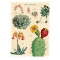 Plakat Kaktus/sukkulenter 50x70cm-01