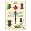 Plakat History insects close up-00