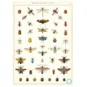 Plakat History insects-00