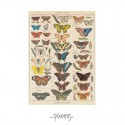 Plakat Sommerfugle 50x70cm-00