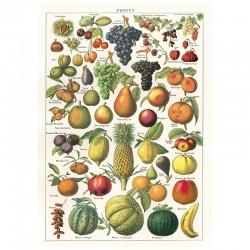 Plakat - Fruits 50x70cm
