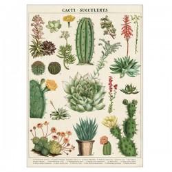 Plakat - Kaktus/sukkulenter 50x70cm