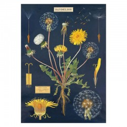 Plakat - Dandelion 50x70cm