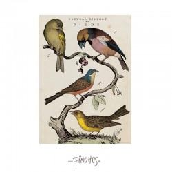 Plakat - Birds 50x70cm