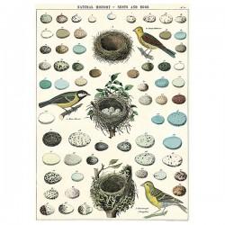 Plakat - Birds/nests 50x70cm